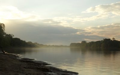 WHY SHOULD YOU CARE ABOUT THE AMAZON RAINFOREST ?