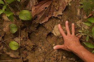 tapir footprint