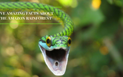 FIVE FACTS ABOUT THE AMAZON RAINFOREST THAT WILL AMAZE YOU!