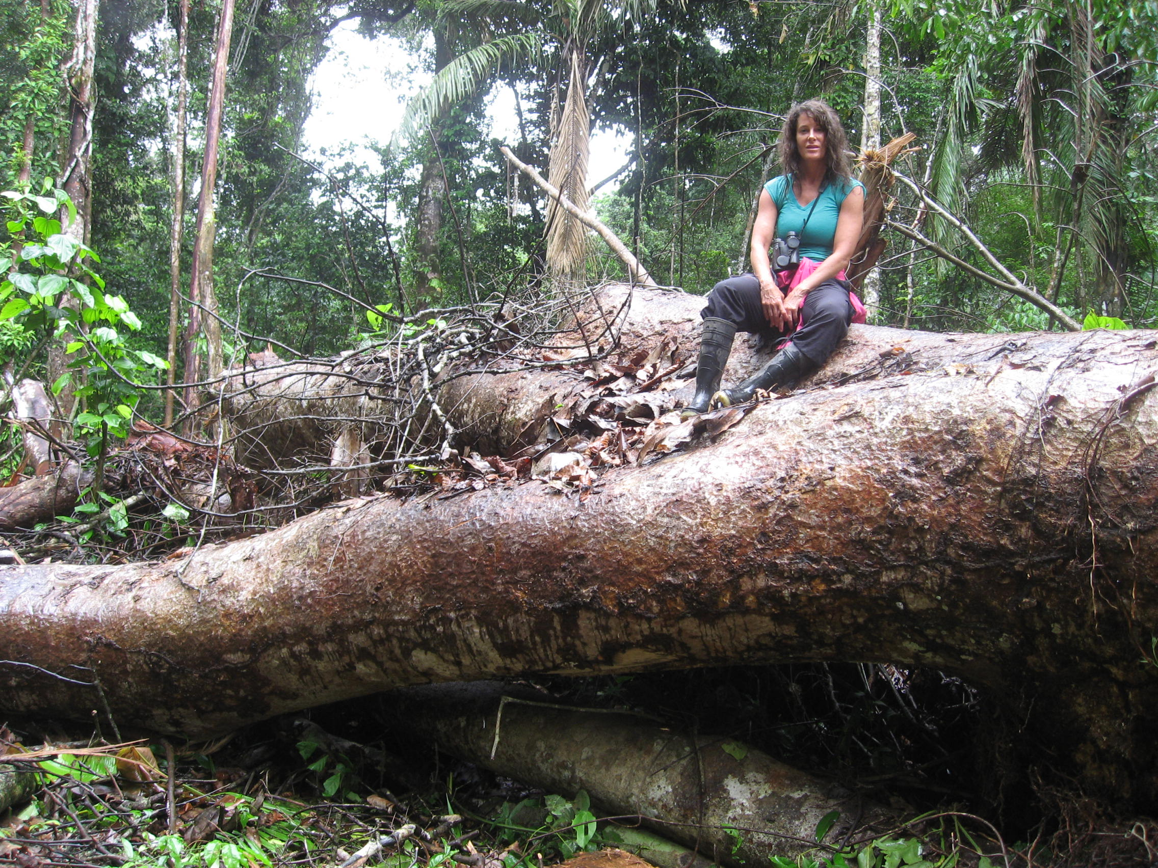 amazon rainforest; jungle; illegal loggers