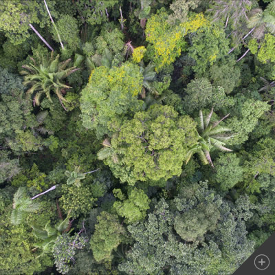 top view of rainforest