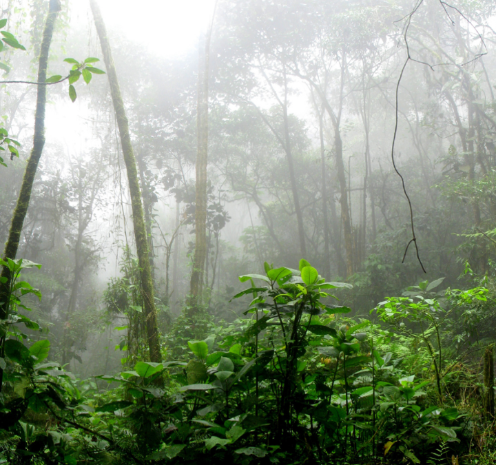 Together we can save 22,000 acres of pristine rainforest from being destroyed!